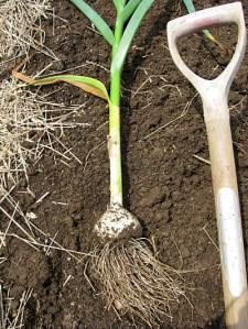 planting-4