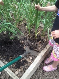 We used a shovel to lift the earth and protect the bulb