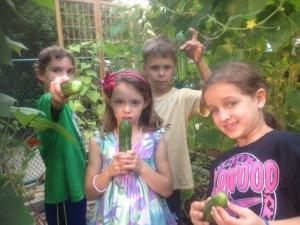 4 cucumbers in august
