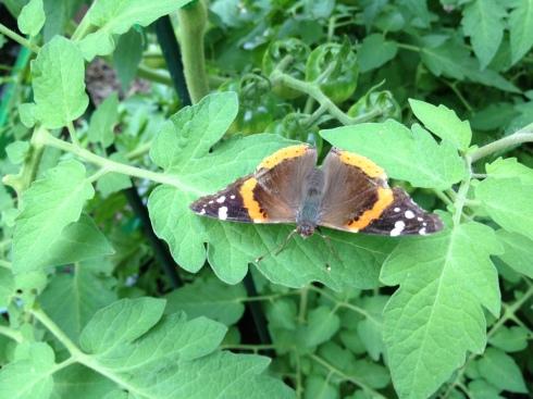 mothORbutterfly