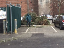 Most of the trees were stored by the staff near the trash.