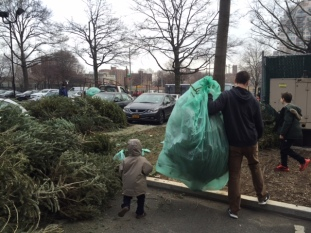 Some brought their trees directly to the festivities