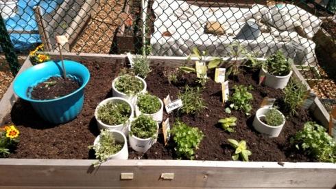 herbs5-8-16-web