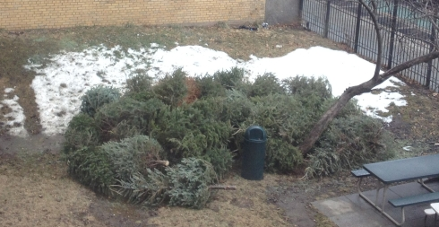 Trees collected as of Thurs 1.11, 2pm