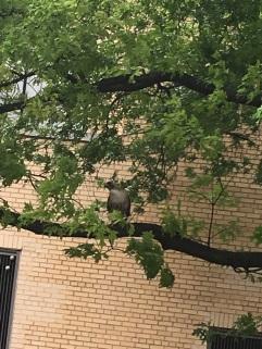 peregrine falcon warner pic