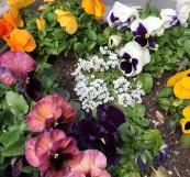 plantercolors